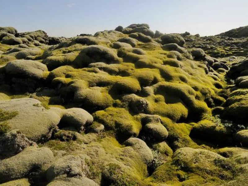 Day Tours for Groups: LAVA SAFARI - The Sublime Reykjanes Peninsula - Iceland